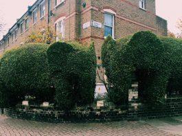 Tim Bushe elephants